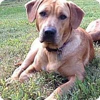 Adopt A Pet :: Abby - Chesterfield, VA