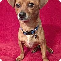Adopt A Pet :: Willard - San Francisco, CA