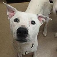Adopt A Pet :: Buckeye - Las Vegas, NV