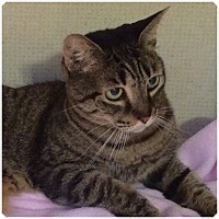 Adopt A Pet :: CLARA - Hamilton, NJ