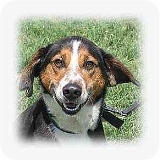Hound (Unknown Type) Mix Dog for adoption in Huntley, Illinois - Aiden