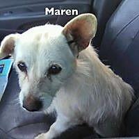 Adopt A Pet :: MAREN - Lindale, TX
