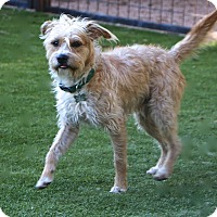 Adopt A Pet :: Harris - MEET ME - Woonsocket, RI