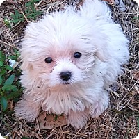 Adopt A Pet :: Cesar and Julie - Fort Lauderdale, FL