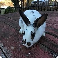 Adopt A Pet :: Spot - Patterson, NY
