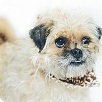 Adopt A Pet :: Tulie - New Castle, PA