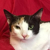 Adopt A Pet :: MILEY - pasadena, CA