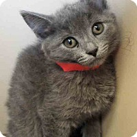 Adopt A Pet :: ADOPTED!!!   Ember - Oswego, IL