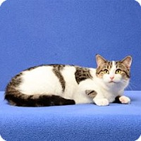 Adopt A Pet :: Simon (must go with Theodore) - Cary, NC