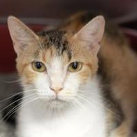 Adopt A Pet :: ALLEY - Kyle, TX