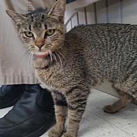 Adopt A Pet :: German - Columbus, OH