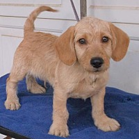 Adopt A Pet :: Hunter - Birch Tree, MO