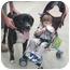 Photo 1 - Mastiff/Terrier (Unknown Type, Medium) Mix Dog for adoption in Spring Valley, New York - Tiger