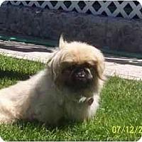 Adopt A Pet :: Tigger- ADOPTED - Columbia Falls, MT