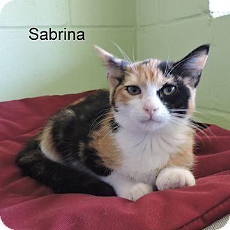 Domestic Mediumhair Kitten for adoption in Slidell, Louisiana - Sabrina