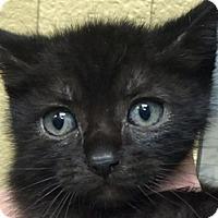 Adopt A Pet :: Simon - LaJolla, CA