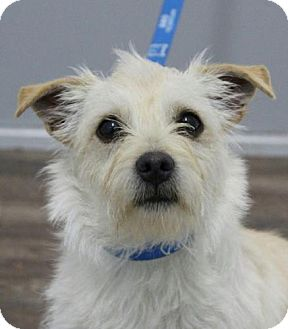 Terrier (Unknown Type, Small) Mix Dog for adoption in Washington, D.C. - Taylor