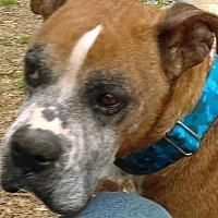 Adopt A Pet :: Ruford - Thomasville, NC