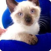 Adopt A Pet :: Lizzi - Davis, CA