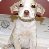 Adopt A Pet :: Petey 💚 DOB 4/07/17! - Saratoga Springs, NY