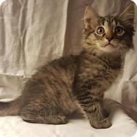 Adopt A Pet :: Luigi - Rochester, NY