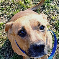 Adopt A Pet :: Sophie Lynn - Woodstock, GA