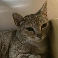 Adopt A Pet :: Madonna - Ashland, VA