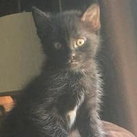 Adopt A Pet :: Fonzie - Carroll, IA