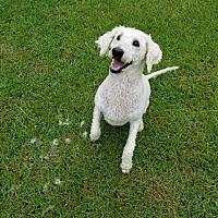 Adopt A Pet :: DIAMOND-ADOPTED - Marshfield, MA