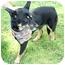 Photo 3 - Shepherd (Unknown Type) Mix Dog for adoption in Cincinnati, Ohio - Mya