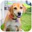 Photo 2 - Labrador Retriever Mix Dog for adoption in Austin, Texas - Macy