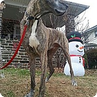 Adopt A Pet :: Theo - Phoenixville, PA