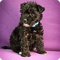 Adopt A Pet :: Crackle - Broomfield, CO