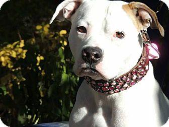 Bull Terrier Mix Dog for adoption in Saskatoon, Saskatchewan - Truffles