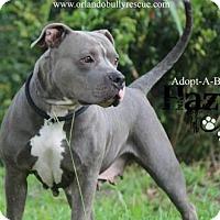 Adopt A Pet :: Hazy - Orlando, FL