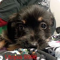 Adopt A Pet :: Utopia - Greencastle, NC