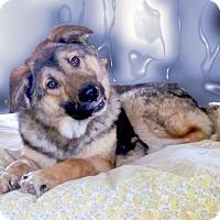 Adopt A Pet :: Prince kind soul - Sacramento, CA