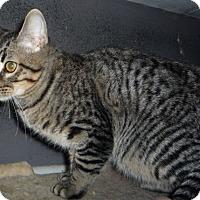Adopt A Pet :: Dallas - Dallas, TX