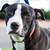 Adopt A Pet :: Hera - Gainesville, FL