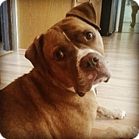 Adopt A Pet :: Holden - Columbia, MD