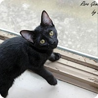 Adopt A Pet :: Jacob - Flora, IL
