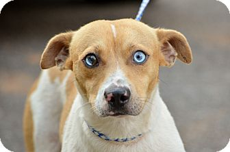 Mountain Cur Mix Dog for adoption in Washington, Georgia - Junior