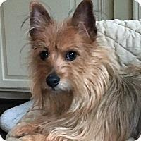 Adopt A Pet :: Rusty - Atlanta, GA