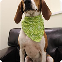 Adopt A Pet :: Willow - Neosho, MO