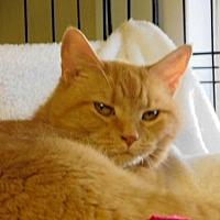 Adopt A Pet :: Zoey - Winston-Salem, NC