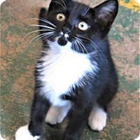 Adopt A Pet :: Feliz - Gonzales, TX