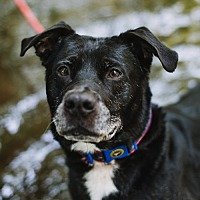 Adopt A Pet :: Diego - Stroudsburg, PA