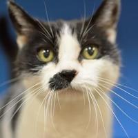 Adopt A Pet :: Kiko - Redmond, OR
