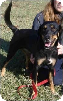Hound (Unknown Type)/Dachshund Mix Dog for adoption in Huntingdon, Pennsylvania - Casey