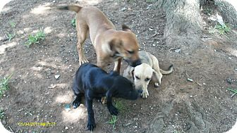 Dachshund Mix Dog for adoption in Atmore, Alabama - Dottie